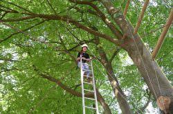 Ein Mädchen auf einer Leiter im Hochseilgarten