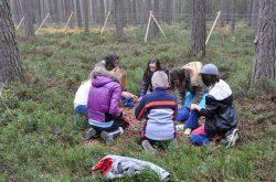 Kinder sammeln Kastanien